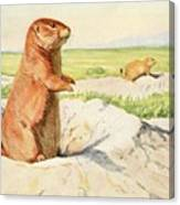 Fuertes, Louis Agassiz 1874-1927 - Burgess Animal Book For Children 1920 Prairie Dog Canvas Print