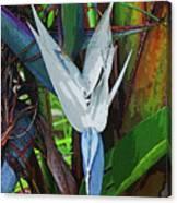 Full Bird Canvas Print