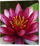 Full Lotus Canvas Print