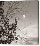 Full Moon Behind Cottonwood Tree Canvas Print