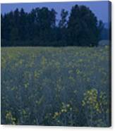 Full Moon Setting Over Rapeseed Field Canvas Print