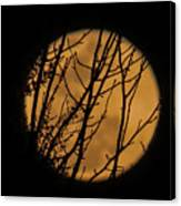Full Moon Through The Branches Canvas Print