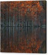 Full Of Glory - Cypress Trees In Autumn Canvas Print