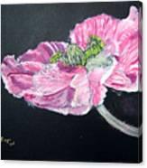 Fully Open Poppy Canvas Print