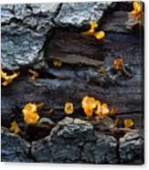 Fungi On Log Canvas Print