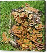 Fungus Bouquet Canvas Print