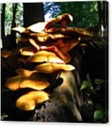 Fungus Colony 23 Canvas Print