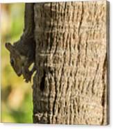 Funky Ear Squirrel Canvas Print