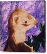 Funny Ferret Canvas Print