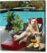 Funny Pet  Vacationing Kitty Canvas Print