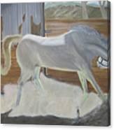 furious Horse Canvas Print