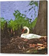 Furman University Swan Canvas Print