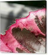 Furry Leaf Canvas Print