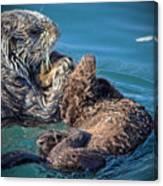 Furry Nurturance Canvas Print