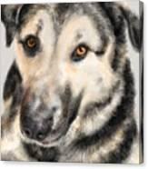 Furry Pooch Canvas Print
