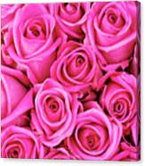 Fuschia Colored Roses Canvas Print