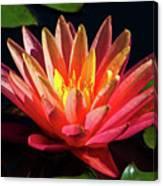 Fushia Waterlily 1 Canvas Print
