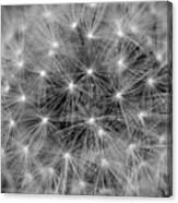 Fuzzy - Black And White Canvas Print