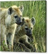 Fuzzy Baby Hyenas Canvas Print