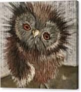 Fuzzy Owl Canvas Print