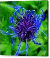 Fuzzy Purple Flower Canvas Print