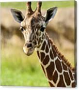 G Is For Giraffe Canvas Print