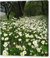 Gaia Blooming Canvas Print