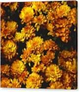 Gaia's Gold Canvas Print