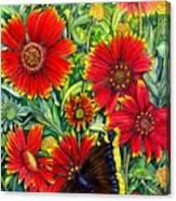 Gaillardia Canvas Print