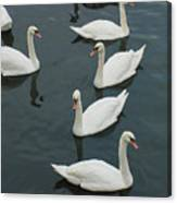 Galway Swans On The Claddagh Canvas Print