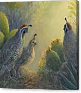 Gambel's Quail - Early Light Canvas Print