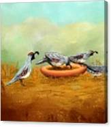 Gambel's Quail On Parade Canvas Print
