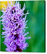 Garden Blooms Canvas Print