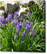 Garden Elegance Canvas Print