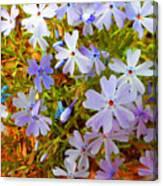 Flower Photography- Floral Art- Digital-floral Fireworks Canvas Print