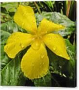 Garden Flower In Kwajalein Canvas Print