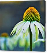 Bristle Flower Canvas Print
