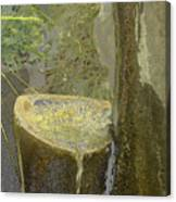 Garden Fountain Canvas Print