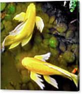 Garden Goldenfish Canvas Print