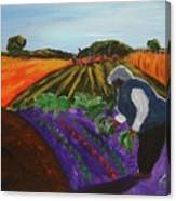 Garden In The Field Canvas Print