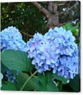 Garden Landscape Blue Hydrangeas Art Print Baslee Troutman Canvas Print