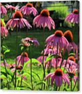 Garden Of Cones Canvas Print