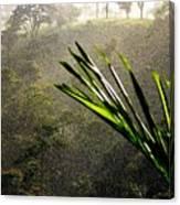 Garden Of Eden Rain Canvas Print