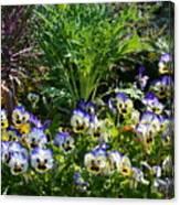 Garden Pansies Canvas Print