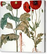 Garden Poppy Canvas Print