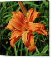 Garden With A Blooming Double Daylily Flowering Canvas Print