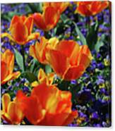 Garden With Blooming Yellow And Red Tulip Blossoms Canvas Print
