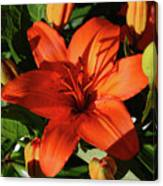 Garden With Lily Buds And A Blooming Orange Lily Canvas Print