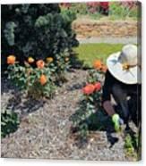 Gardener Pulling Weeds  Canvas Print