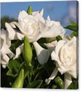 Gardenia Flowers Canvas Print